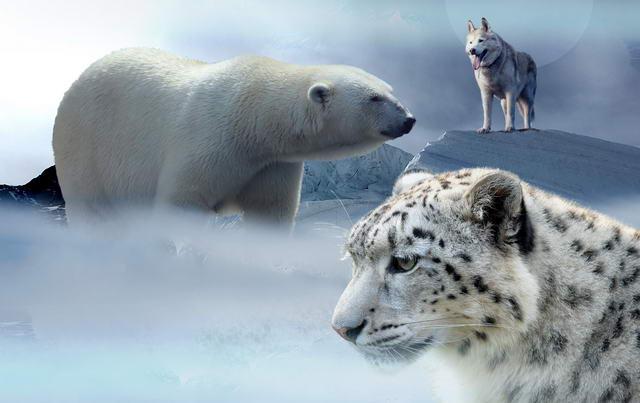 WWF Deutschland